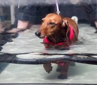 k-9-hydrotherapy-2
