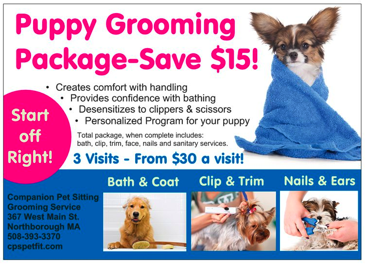 Puppy Grooming Package Save 15 Companion Pet Sitting Llc